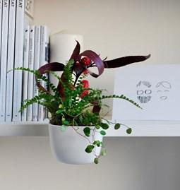HOI _ S fine bone china flowerpot