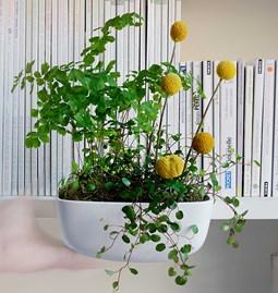 HOI _ L fine bone china flowerpot