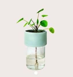 Pot PLANT JAR