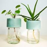 Pot PLANT JAR 6