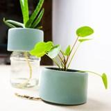 Pot PLANT JAR 5