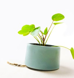 PLANT JAR Flowerpot