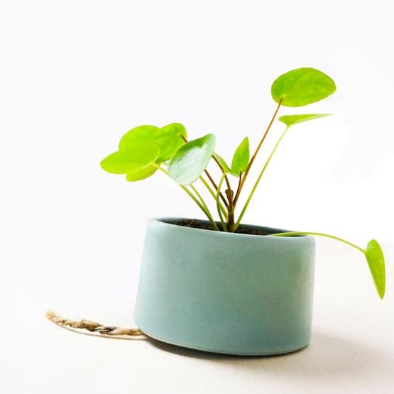 PLANT JAR Flowerpot  - Design : Studio Lorier