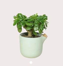 NATURAL BALANCE Self Watering Pot - green