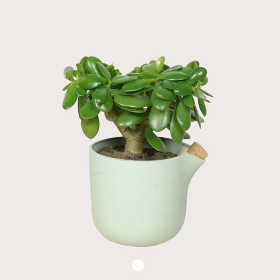 NATURAL BALANCE Self Watering Pot - green - Design : Studio Lorier