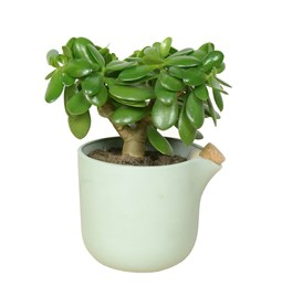 NATURAL BALANCE Self Watering Pot - green