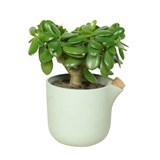 NATURAL BALANCE Self Watering Pot - green 6