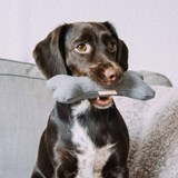 BONE Wool dog toy with squeaker  4