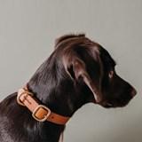 FIR leather dog collar - black 5