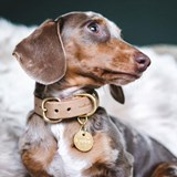 FIR leather dog collar - latte 5