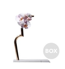 Vase JIN SHI - Box 15