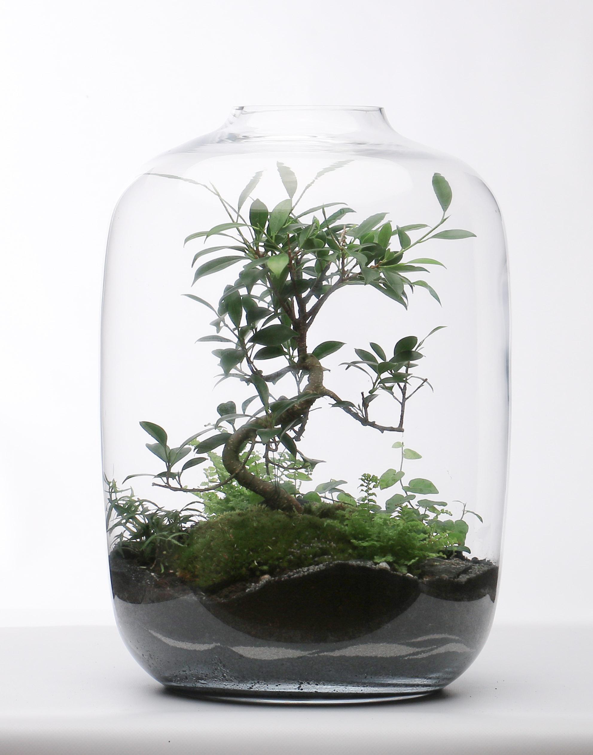 Terrarium Lorient Glass Jade Design Designerbox