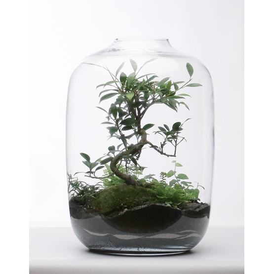 Terrarium Lorient - glass  - Design : Jade Design