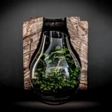 Terrarium Organic - Verre  4