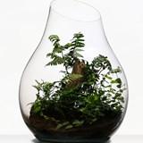 Terrarium Organic - Verre  5