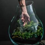Terrarium Organic - Verre  3