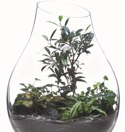 Terrarium Organic - Verre