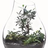 Terrarium Organic - Verre  2
