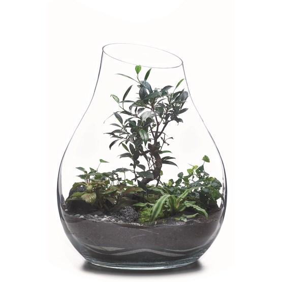 Terrarium Organic - Verre  - Design : Jade Design