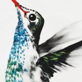 Plate Hector Hummingbird 4