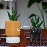 Plume 100 pot - coffee  3
