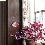 Miroir cuivre SCORPION - Designerbox 2
